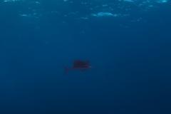 Französisch Poynesien-Südsee-89