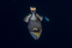 Französisch Poynesien-Südsee-97