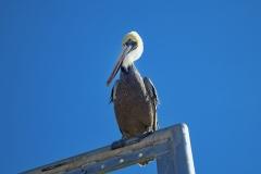 Isla Guadalupe-Socorro San Diego unbenannt-7820