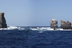 Isla Guadalupe-Socorro T70A8299