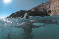 Isla Guadalupe-Socorro unbenannt-6531