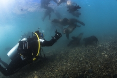 Isla Guadalupe-Socorro unbenannt-6559