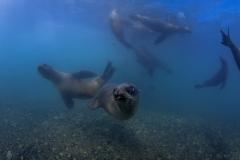 Isla Guadalupe-Socorro unbenannt-6647-2