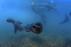 Isla Guadalupe-Socorro unbenannt-6648
