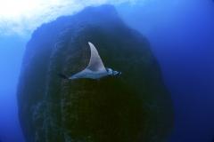 Isla Guadalupe-Socorro unbenannt-7202