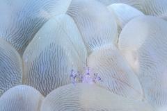Lembeh Strait 20156K6B2166