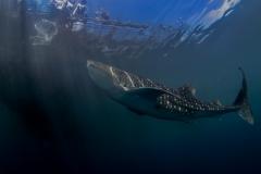 Lembeh Strait 20156K6B2651