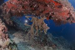 Lembeh Strait 20156K6B3609