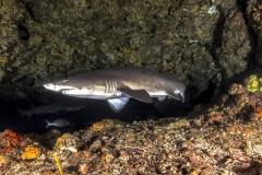 Isla Guadalupe-Socorro unbenannt-5232-2