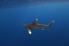 Shark Week 2012 Ägypten-16