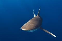 Shark Week 2012 Ägypten-21