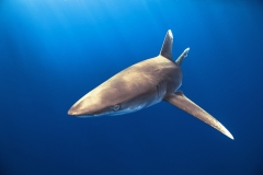 Shark Week 2012 Ägypten-22