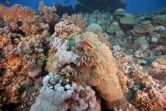 Shark Week 2012 Ägypten-25
