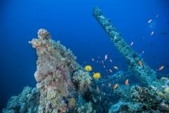 Shark Week 2012 Ägypten-27