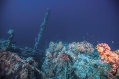 Shark Week 2012 Ägypten-28