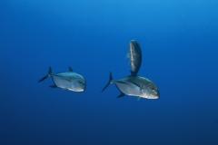 Shark Week 2012 Ägypten-32