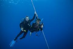 Shark Week 2012 Ägypten-50