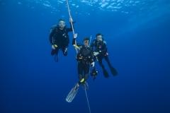 Shark Week 2012 Ägypten-51