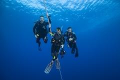 Shark Week 2012 Ägypten-52