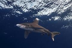 Shark Week 2012 Ägypten-55