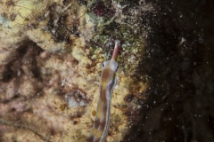 Shark Week 2012 Ägypten-58